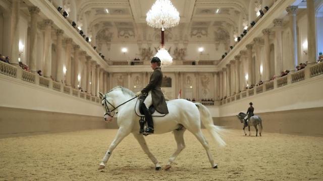 The Lippizaner horses, Vienna.