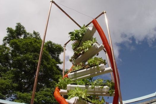 An urban oasis - with hydroponics.