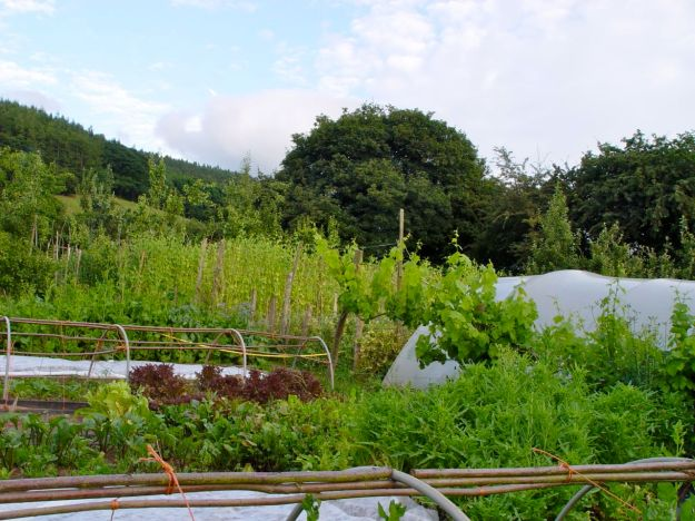 Intensively cultivating year round vegetables and fruit, for the people of Powys and the restaurants of the Wye Valley.