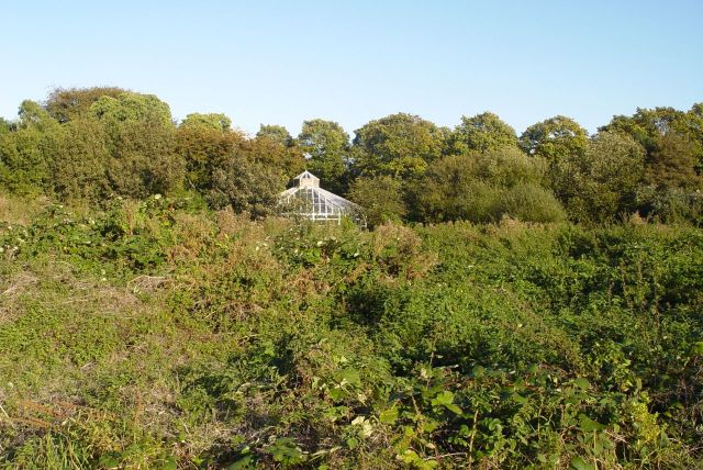 Now, where the glasshouses once stood, a field of brambles.