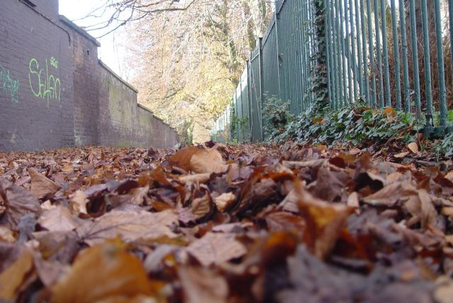 One of Liverpool's most glorious ancient and hidden roads.