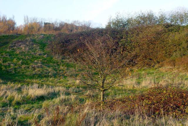 Wild heathland.
