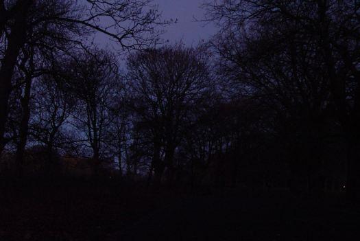 Through Sefton Park in the dark.