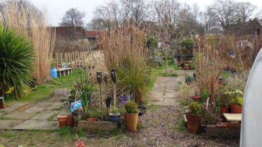 Could well be Sarah's favourite bit, her allotment.