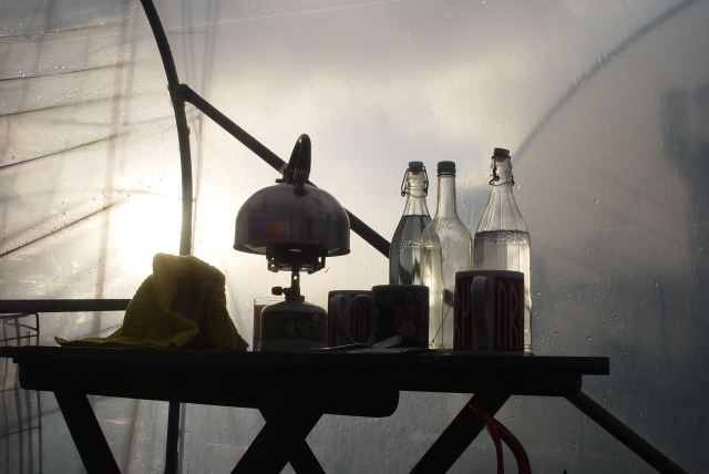 The rain returns and we huddle inside the polytunnel with our tea.