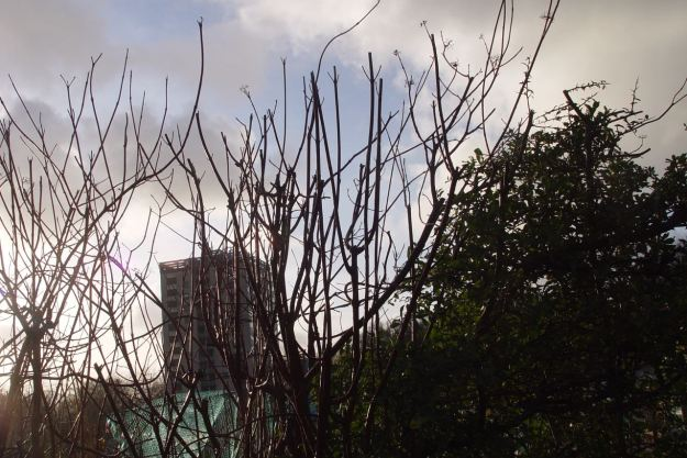 As the clouds scud over the dogwood and the tower block.