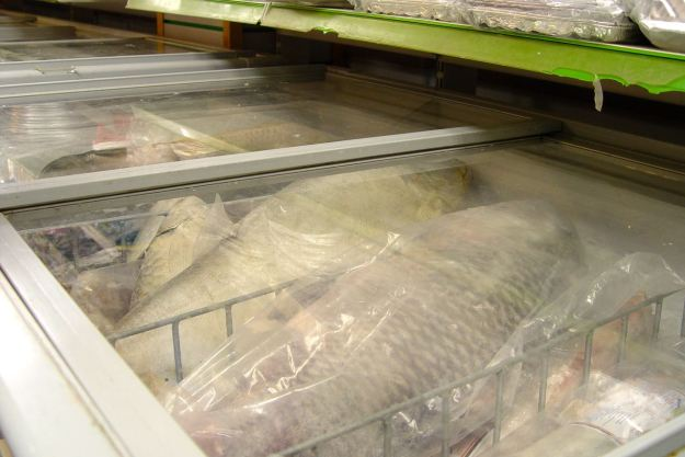 There are frozen fish nearly bigger than the fridge they're in.