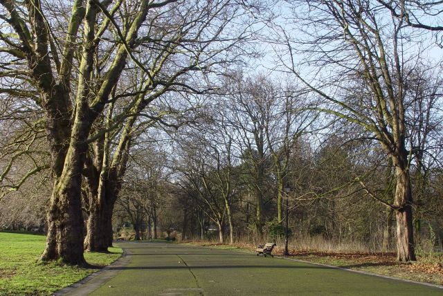 Through the avenue of winter trees in Sefton Park.