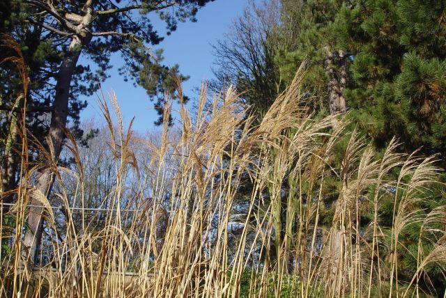 High grasses under a blue winter sky.