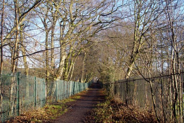 Along Ibbotson's Lane. Snow and frost all turned to gentle leaf-mould mud here.