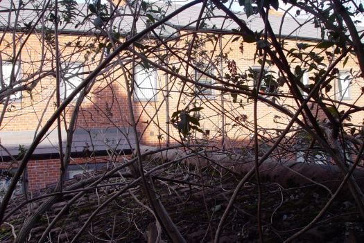 And through the brambles on the outrigger to the Plus Dane houses in Beaconsfield Street.