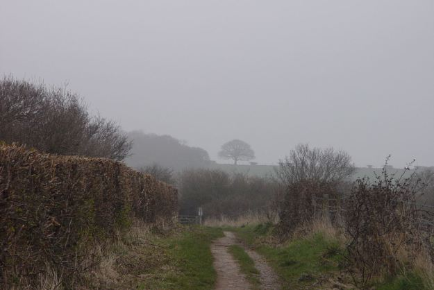Mist on the Shining Shore Walk.