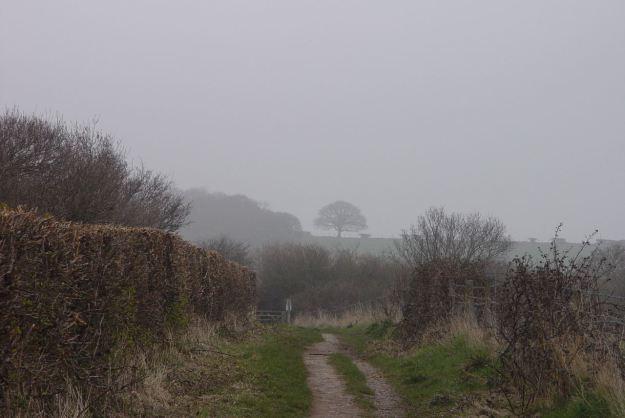 Mist on the Shining Shore Walk.