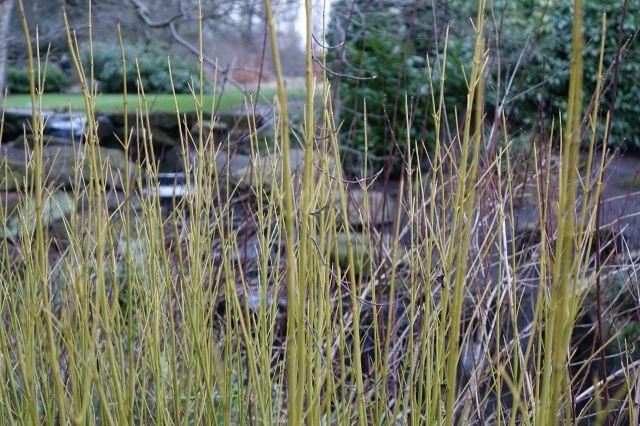 Green winter grasses.