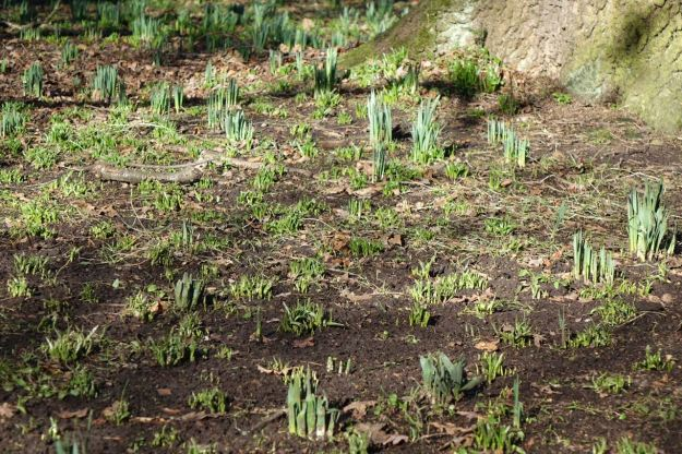 The ground here in Calderstones Park is full of new growth.
