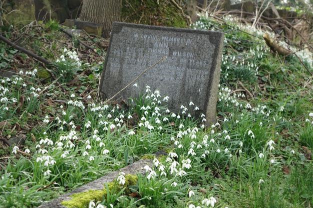 The snowdrops are here.