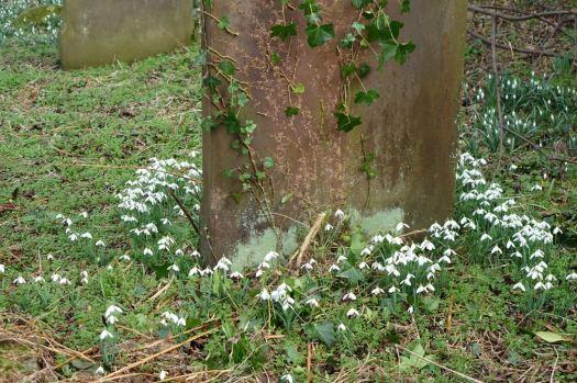 All around the gravestones.