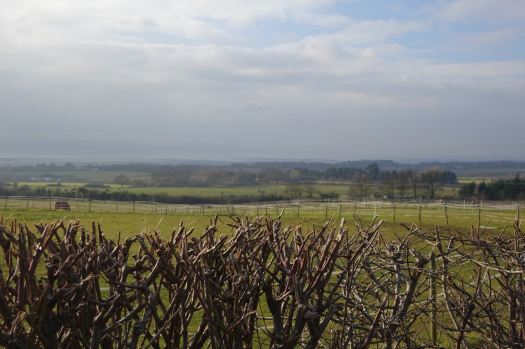 After lunch we walk the high lane, far above the Dee Estuary.