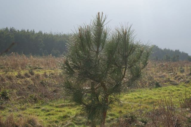 Past the Christmas tree plantation.