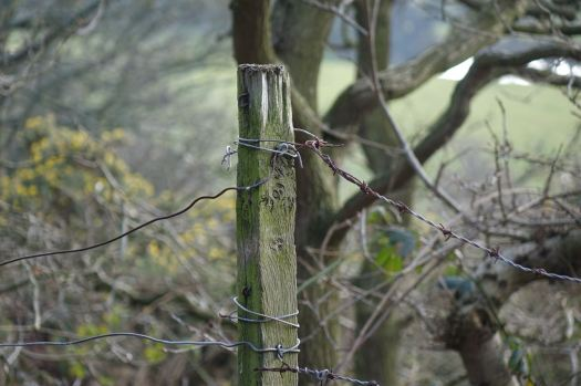 So me and the camera focus on closer things. Old fence posts.