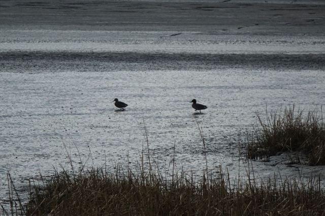 The gentle ducks.