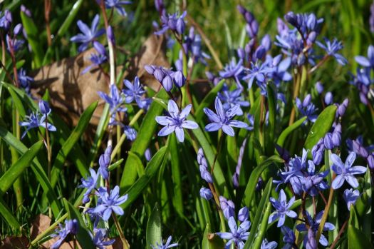 With Spring Squill and much more besides.