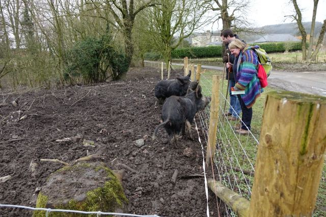Then we meet the pigs.