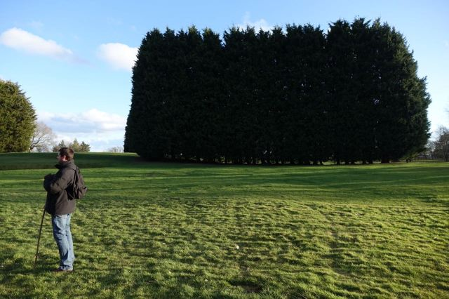 As we finish by crossing a golf course Bren id to repelled by this ridiculous stand of Leylandii to look at them.