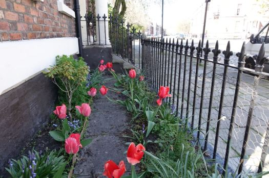 So pausing only to admire these giant tulips in Bedford Street South, I walk down the hill to the 82.