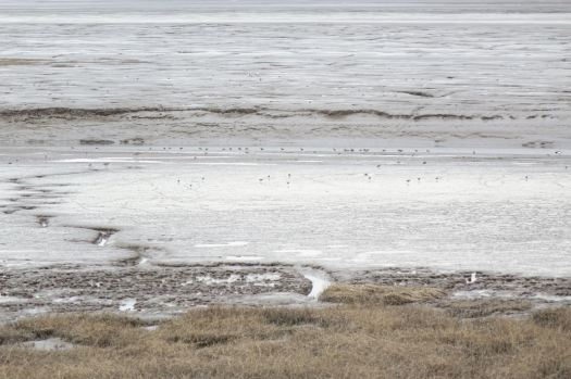 The shoreline is full of wading birds.