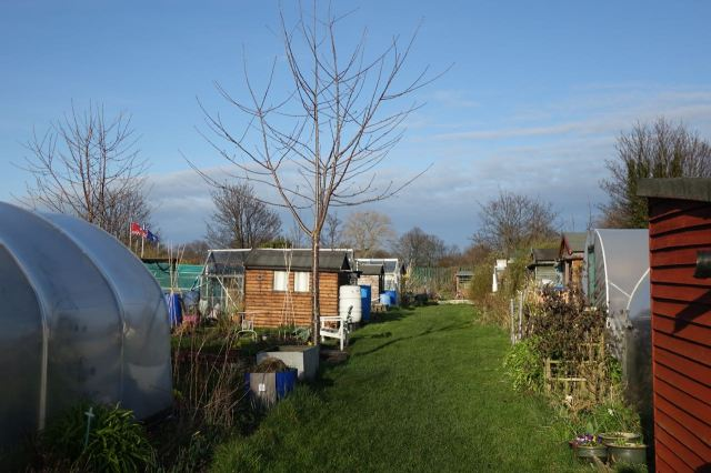 Here at Greenbank Lane Allotments.