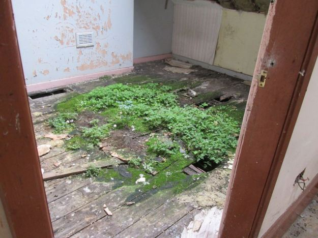 Some houses were open to the sky, with this unexpected 'greening of Granby in their upstairs rooms.