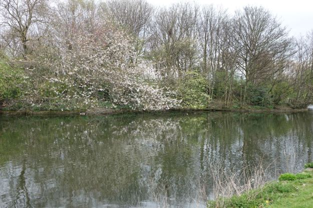 And here in Walton Hall Park its springtime.