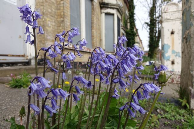 Even the bluebells have turned up to join us.