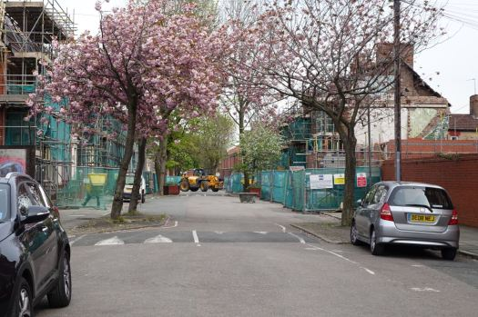In Beaconsfield Street, the trees are blooming.