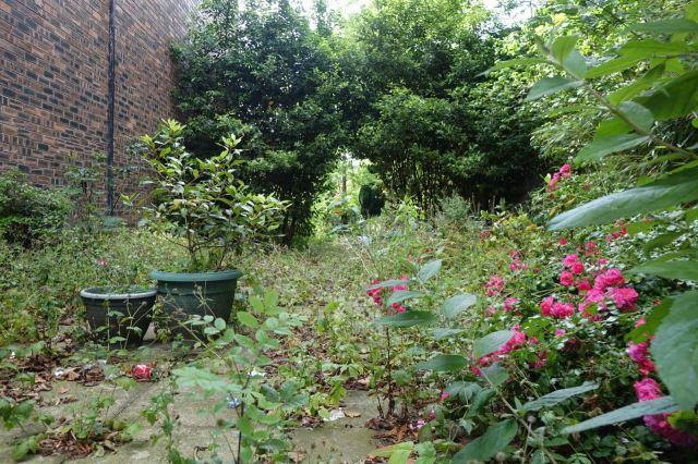 Its garden in full summer growth.