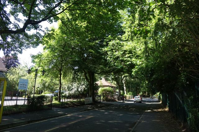 Along lovely Greenback Lane, full heavy leaved canopy closure now.
