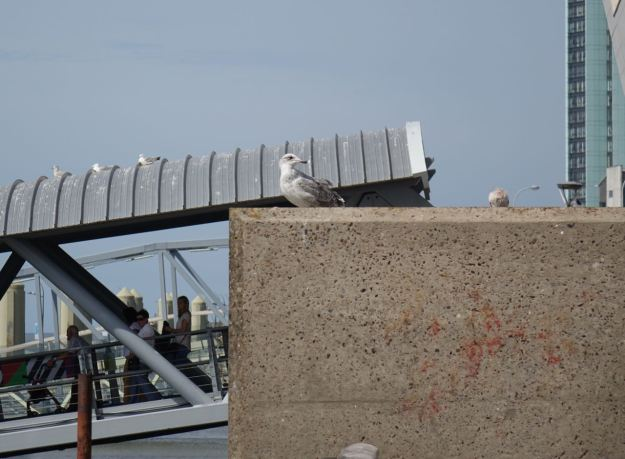 And the sceptical seagulls.