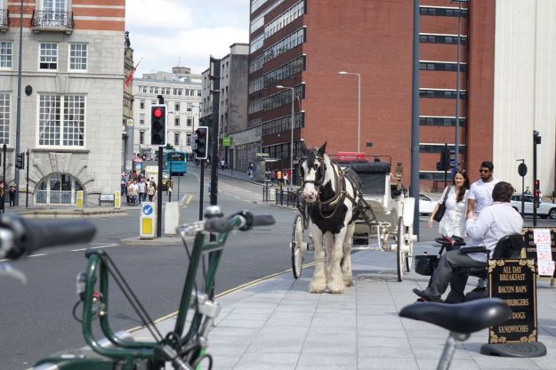 Plus this horse and cart.