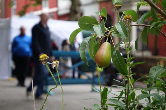 And the guerrilla gardened pear tree in the street friend.