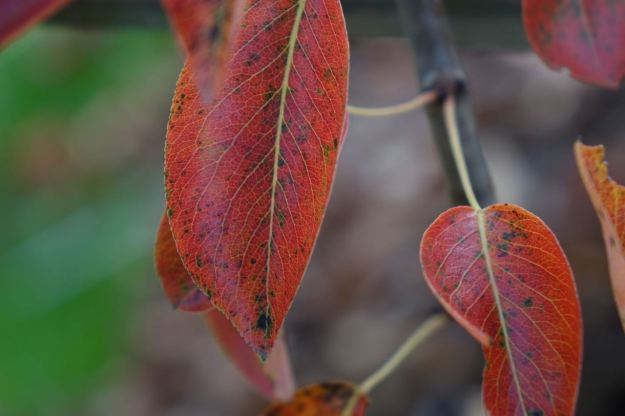 Where the cold nights and still warmish days have given us these autumnal riches.