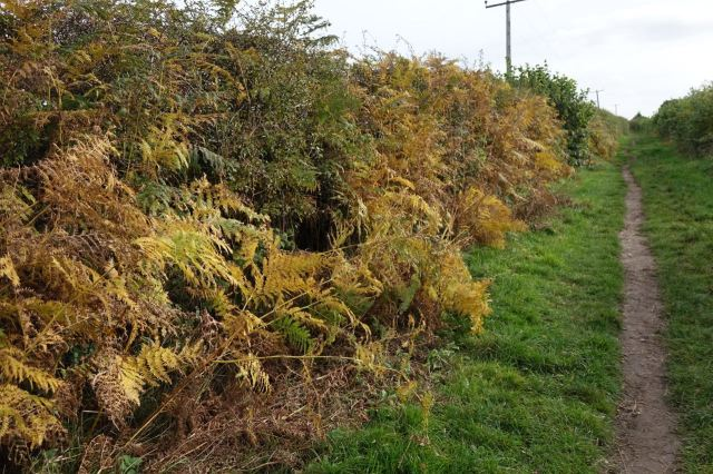 In the lanes the autumn dieback is beginning.