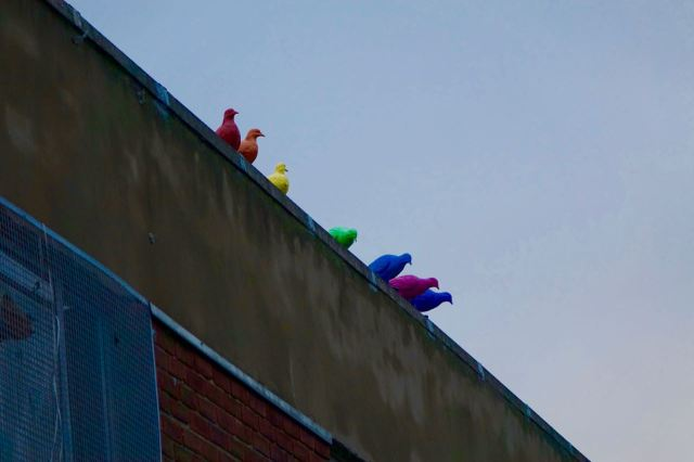 But what are these doing on the roof.
