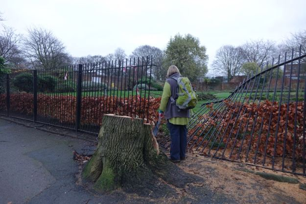 Then into Greenbank Park where we lost this tree in recent storms.