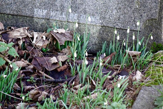 Like the springtime to come, gently announced by the snowdrops.