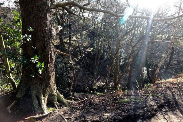 The deep ravine.