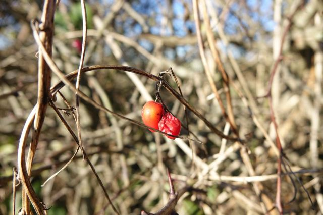 Very little left in the hedgerows now.