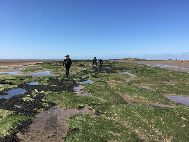 Gaz diverts us to some patches of Bladderwrack and it's a bit firmer underfoot.