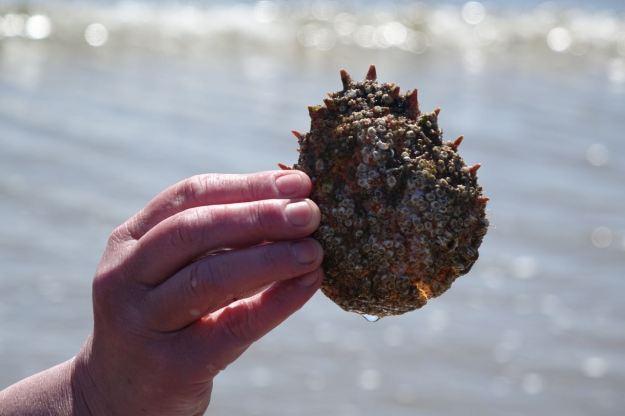 All barnacle encrusted.