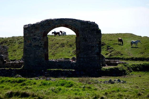 Wild horses obligingly frame themselves in the abbey ruins.
